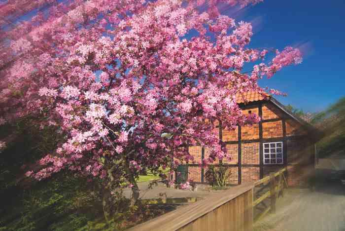 Wassermühle Heiligenthal Kirschblüte