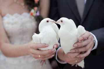 Hochzeitsmesse Schloß Reinbek Tauben