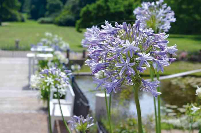 Der Schlosspark wir zu jeder Jahreszeit mit den Blumen der Saison bepflanzt.