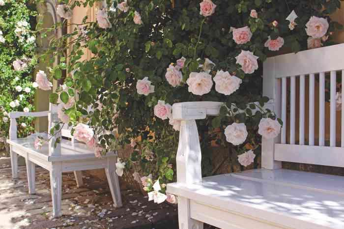 Romantische Bänke am Schloss zwischen großen Rosenbüschen.