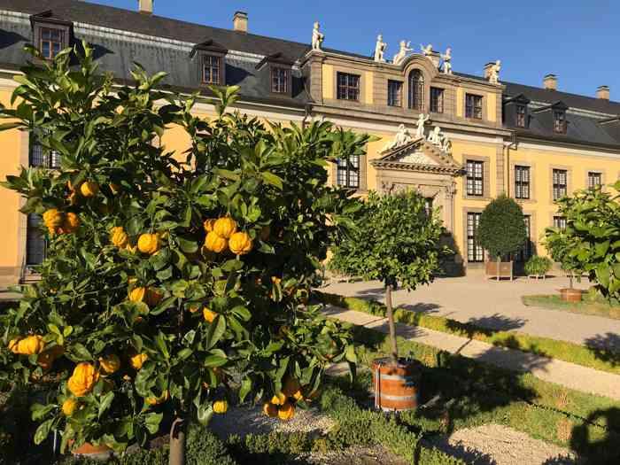 Orangenbaum vor der Hochzeitslocation Galerie Herrenhausen.
