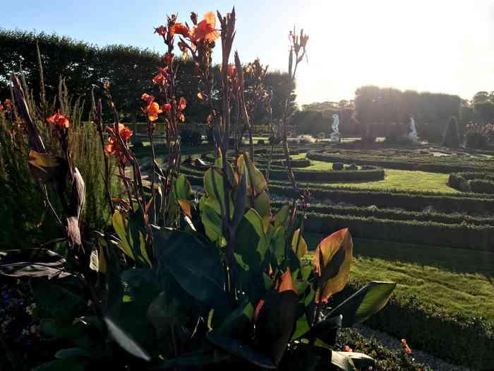 Indisches Blumenrohr im Blumengang der Parkanlagen im Gegenlicht des offiziellen Trauortes des Standesamtes Hannover, Galerie Herrenhausen.