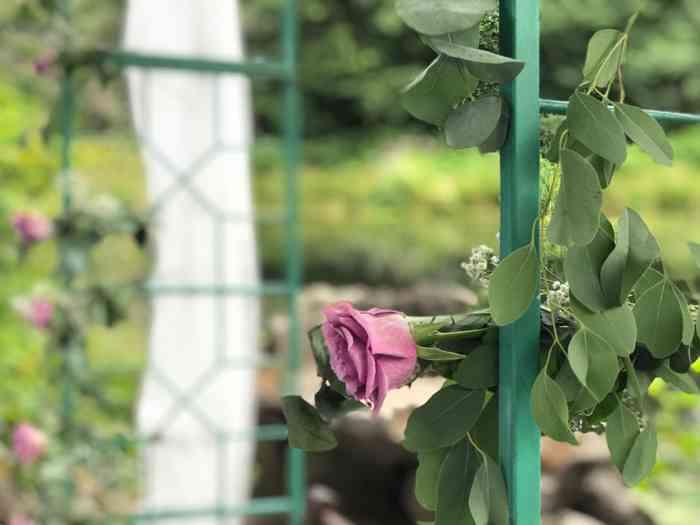 Rosenbogen für die Trauzeremonie der Hochzeitslocation Haus Schnede.