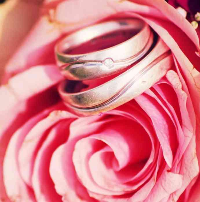 Ivorys Wedding Dream